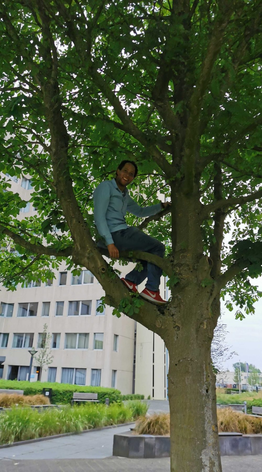 Dirk in the tree